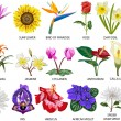 18 Species of colorful flowers — Foto Stock