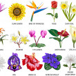 18 Species of colorful flowers - Stock Photo