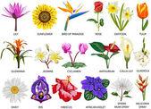 18 druhů barevných květin — Stock fotografie