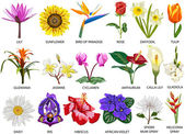 18 tür renkli çiçekler — Stok fotoğraf