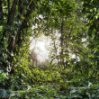 Green tropical forest — Stock Photo