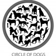Circle of Dogs — Stock Photo
