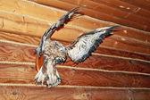 Gavião empalhado na parede da loja de caça — Foto Stock