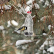 Постер, плакат: A bird eats the seeds of handmade bird feeders