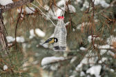 A bird eats the seeds of handmade bird feeders — Stock Photo