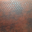 The texture of the snake leather — Stock Photo