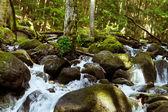 水を飲むと純粋な渓流 — ストック写真