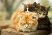 Three little kitten in the village — Stock Photo