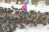 Child and pigeons — Stock fotografie