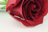 Rose with a ring inside — Stock Photo