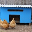 Chicken Coop - Stock Photo