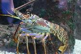 龙虾 — 图库照片