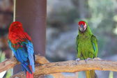 Different Parrots — Stock Photo
