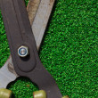 Scissors cut the grass  — Stock Photo