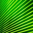Palm leaf — Stock Photo #33738341