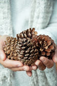 Hand holding cedar cone — Stock Photo