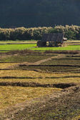 Paddy field in countryside — Stock Photo