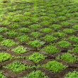 Close up of grass floor block — Stock Photo