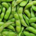 Edamame soy beans — Stock Photo