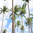 Coconut palm trees — Stock Photo