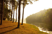Sunrise at Pang-ung, pine forest park in thailand — Stock Photo