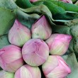Lotus flowers and pods — Stock Photo