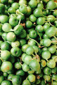 Green Turkey berry — Stock Photo