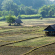 Paddy field in countryside — Stock fotografie