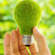 Eco light bulb energy — Stock Photo