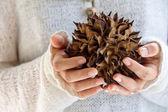 Natural spiky tree — Stock Photo
