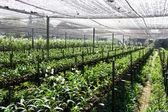 Orchidej farmy — Stock fotografie