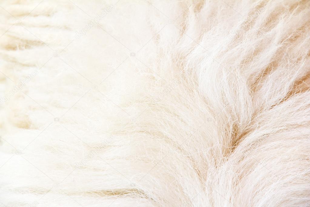 gros plan de la laine de mouton photographie ponsulak 42634921. Black Bedroom Furniture Sets. Home Design Ideas