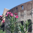 Stock Photo: Flowers on background of Colosseum in Rome