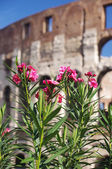 Flowers on the background of Colosseum in Rome — Stock Photo