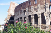 Flowers and the Colosseum in Rome, Italy — Stok fotoğraf