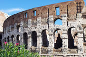 Flowers and the Colosseum in Rome — Stock Photo