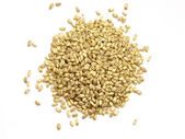 Wheat — Стоковое фото