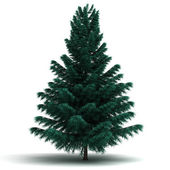 Single Spruce Pine Tree — Stock Photo