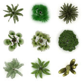 Trees from top view — Stock Photo