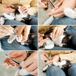 Stock Photo: Trimming cat nails