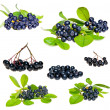 Aronia - Black Choke berry — Stock Photo