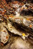 Caracol en el arroyo — Stock Photo