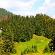 Alpine mountain scenery with fir tree — Stock Photo