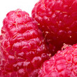 A beautiful selection of raspberries — Stockfoto