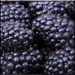 Fresh Ripe Blackberries with water drops — Stock Photo