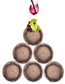 Wine barrels isolated with grapevine — Stock Photo