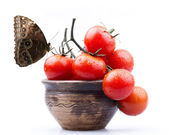 Cherry tomatoes and butterfly — Stock Photo
