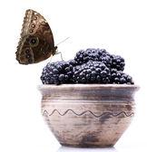 Moras con gotas de agua y de la mariposa — Foto de Stock