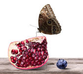Ripe pomegranate and tasty blueberrie fruit with butterfly — Stock Photo
