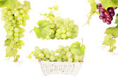 White and pink grape isolated — Stock Photo